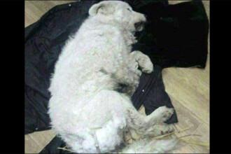 Cazul câinelui udat cu apă ca să îngheţe a ajuns până la Kremlin. Explicaţia stăpânului animalului