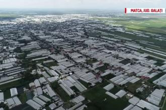 Românii cumpără seminţe de roşii de milioane de euro din import pentru