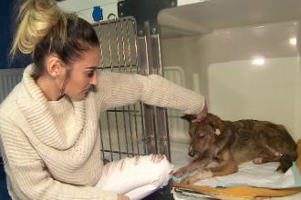 Câine bătut cu bestialitate, în adăpostul din Tecuci. Reacția directorului padocului