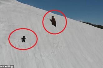 Lecția oferită de un pui de urs pe un versant înzăpezit a captivat milioane de oameni. VIDEO