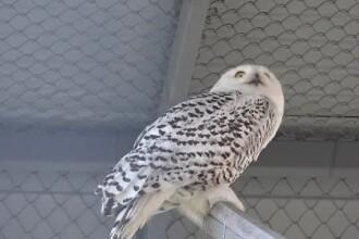 Grădina zoologică din Târgu Mureș a primit animale din Olanda. Ce poate fi văzut în premieră