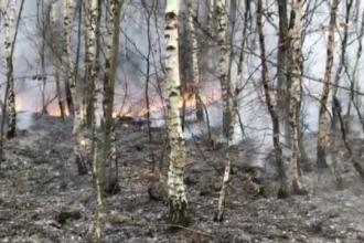 Incendiu puternic în Munţii Apuseni. Flăcările distrug peste 75 hectare de vegetaţie şi arbori