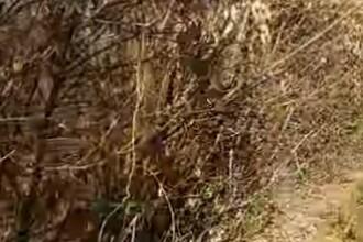 Minoră violată şi ucisă, într-o pădure! Ritualul satanist descoperit de poliţie la locul crimei. VIDEO