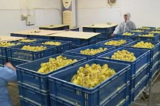 Rusia avertizează că virusul de gripă aviară poate suferi mutaţii şi s-ar putea transmite de la om la om