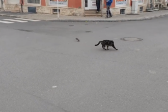 Momentul hilar în care o pisică fuge îngrozită de un șobolan care o urmărește. Cum a început totul