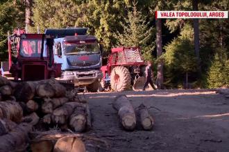 Politicienii, principalii responsabili pentru tăierile masive din păduri: Furturile de lemne sunt girate de autorități