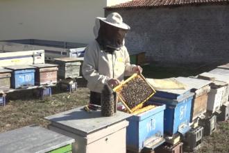 Apicultorii români se laudă cu producție mare de miere de albine. Ce cantitate va merge la export