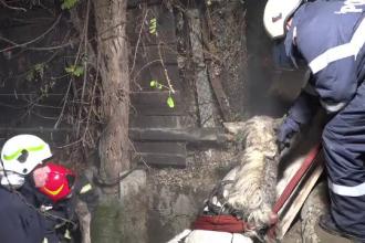 Operațiune de salvare a unui cal căzut în canal, în Mureș. Cum a ajuns animalul în această situație