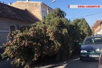 Dezastru lăsat de muncitorii care au târât un brad de Crăciun prin centrul Lugojului