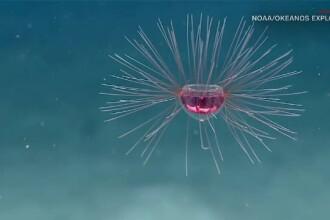 Creatură misterioasă, găsită în Oceanul Atlantic. Ce este de fapt