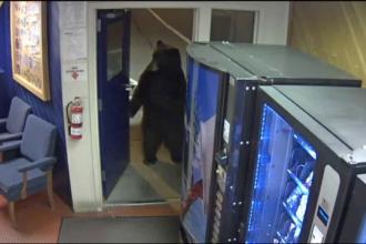 Un urs, musafir nepoftit într-o secție de poliție. Reacția unui ofițer