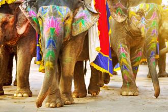 Țara care deschide un spital pentru elefanții maltratați