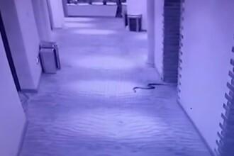 A violat o femeie sub amenințarea atacului cu 3 șerpi veninoși. Ce a urmat