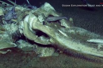 Descoperire uimitoare pe fundul oceanului, în timpul unei transmisiuni LIVE. VIDEO