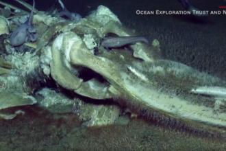 Descoperire uimitoare pe fundul oceanului, in timpul unei transmisiuni LIVE. VIDEO