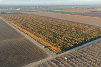 Plantații de 1 miliard de dolari, descoperite pe un câmp din California