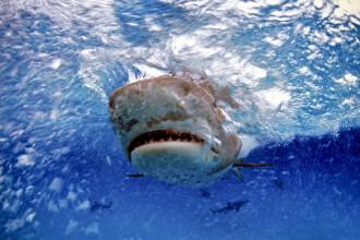 Un scafandru ar fi fost devorat de un rechin, în Australia. Ce a păţit prietena lui
