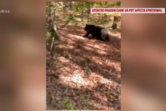 Oameni atacaţi de urşi, la vânătoare. Poliţia a deschis o anchetă