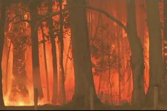 Incendiile devastatoare din Australia se intensifică.
