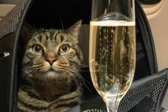 Un pasager s-a îmbarcat cu o pisică prea grea în avion. Cum a fost sancționat