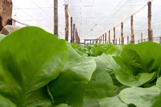 Recoltele de toamnă târzie, sursă importantă de profit pentru fermierii români