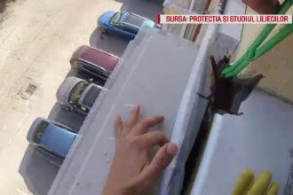 Un bărbat din Capitală a găsit peste 50 de lilieci după aparatul de aer condiționat