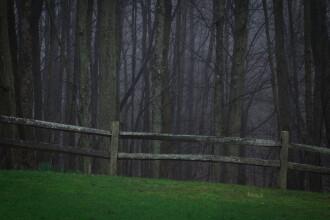 Sunete înspăimântătoare înregistrate de un vânător în pădure. Experții nu le pot explica