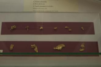 Povestea uimitoare a unor foițe de aur descoperite într-un cavou aflat între blocuri