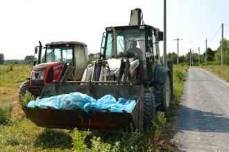 Cadavre de porci găsite într-un lac din Covasna. Autoritățile sunt în alertă