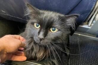 Pisică găsită după 5 ani la 1.900 de kilometri de casă. Reacția stăpânilor