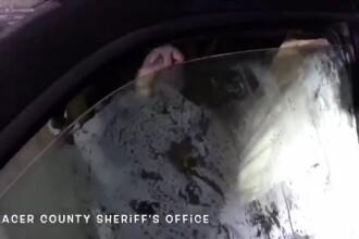 Un urs a rămas captiv într-o mașină în care căuta mâncare. A distrus tot interiorul