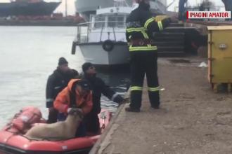 Echipele speciale încearcă să salveze cele 14.000 de oi din nava scufundată