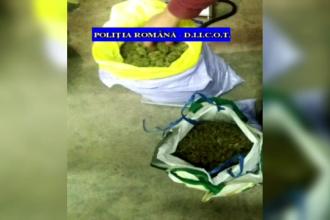 Patru kg de canabis, aduse din Spania prin curier. Doi tineri din Ploiești au fost arestați