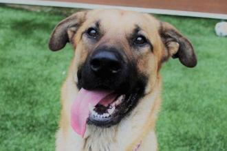 """Un câine maidanez a salvat de la îngheț 5 pisoi abandonați: """"Nu ar fi supraviețuit"""""""