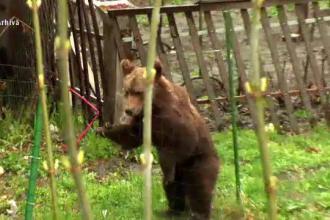 Județele care au semnat deja petiția în care cer ajutorul PE în problema urșilor