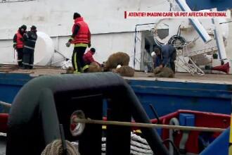 Imaginile șocante cu oile care agonizau pe nava din Portul Midia au ajuns în PE