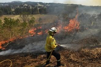 """Pompier acuzat că a declanșat incendii de vegetație în Australia. """"Este ultima trădare"""""""