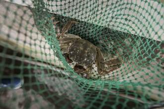 Chinezii se înghesuie să plătească 400 de dolari pentru o cutie de crabi