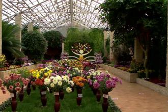 Cea mai mare expoziție de flori de toamnă din România, la Grădina Botanică din Iași