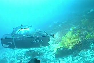 Zeci de specii de plante și vietăți marine, descoperite pe fundul Oceanului Indian