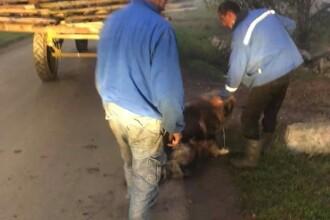 Câine spânzurat de o remorcă, salvat de un campion al României, lângă Timișoara