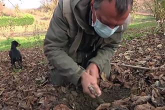 A început vânătoarea de trufe în pădurile din Italia. Cât ajunge să coste un kilogram