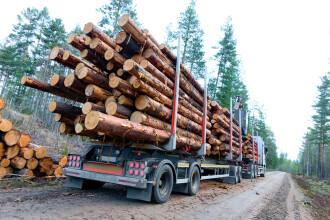 iLikeIT. Cum putem verifica dacă un transport de lemne este legal