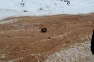 Cranii și oase umane pe un drum din Rusia. Ministerul de Interne a demarat o anchetă