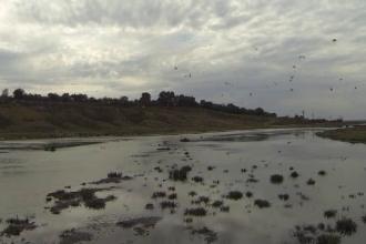 Sezonul de vânătoare la două specii de păsări, suspendat de instanță. Ce reclamau activiștii