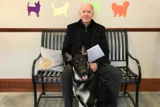 Joe Biden s-a accidentat în timp ce se juca cu câinele său. Anunțul medicilor despre starea sa
