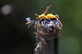 Cum a ajuns o viespe să amenințe siguranța avioanelor din Australia