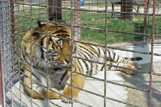 Animalele dintr-o gradina zoologica au fost binecuvantate