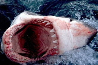 Imagini spectaculoase: un om in lupta cu un rechin de patru metri!