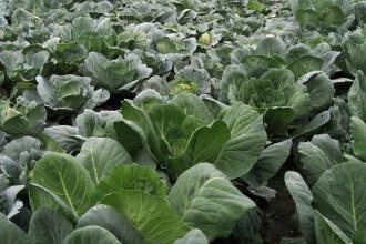 Avem productie buna de legume, dar ne batem joc: